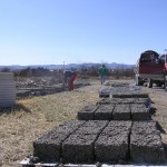 A beautiful site! Papercrete blocks drying in the sun
