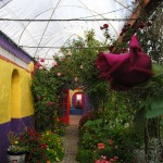 The pathway from the organic flower garden to the covered courtyard